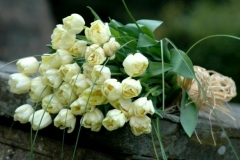 Tied Funeral Sheaf - cream tulips, foliage & raffia
